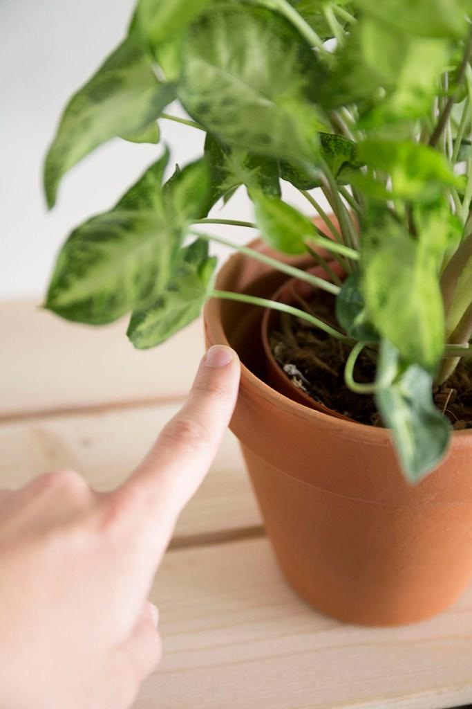 plante pot rempoter