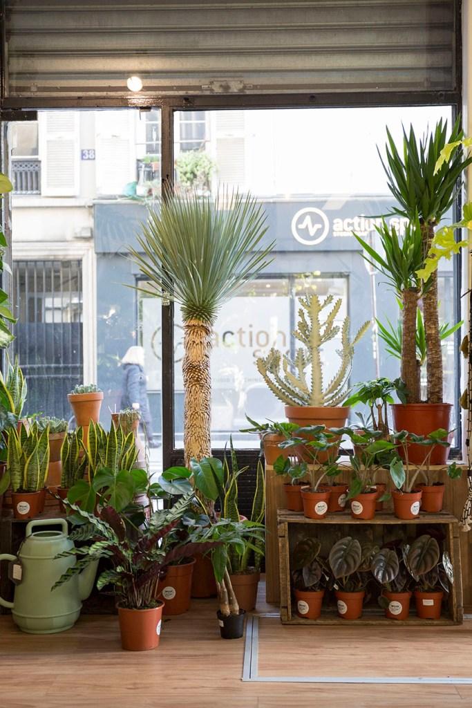 concept vegetal plante