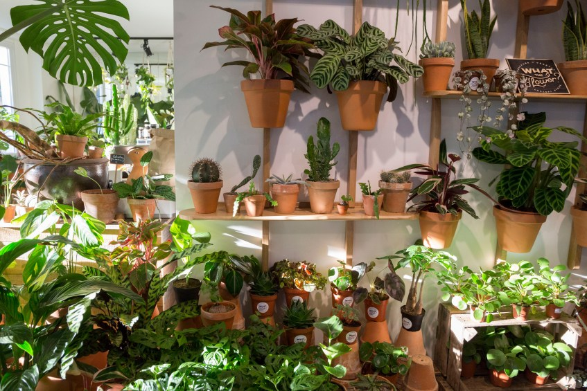 jungle plante interieur