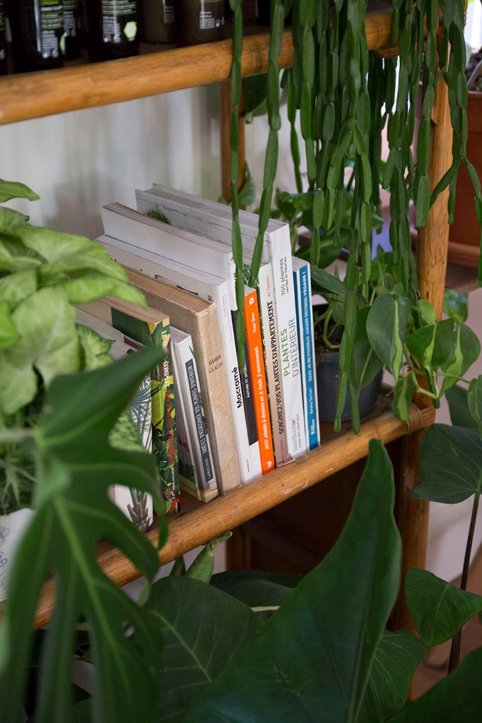 plante jungle interieur