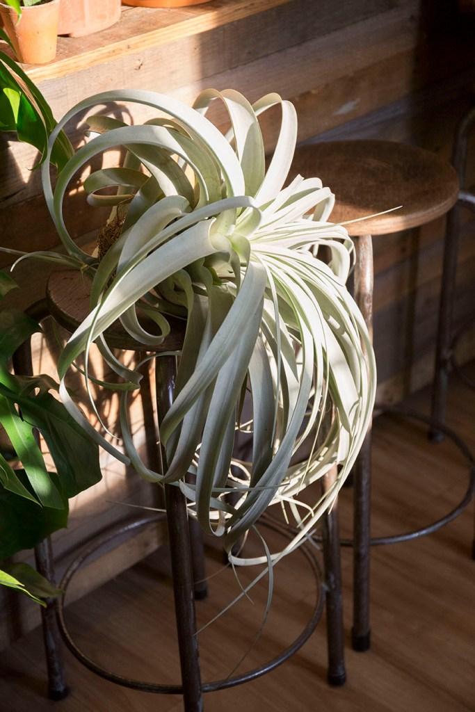 plante vegetal concept