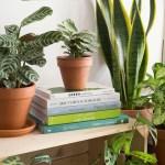 selection livre plante