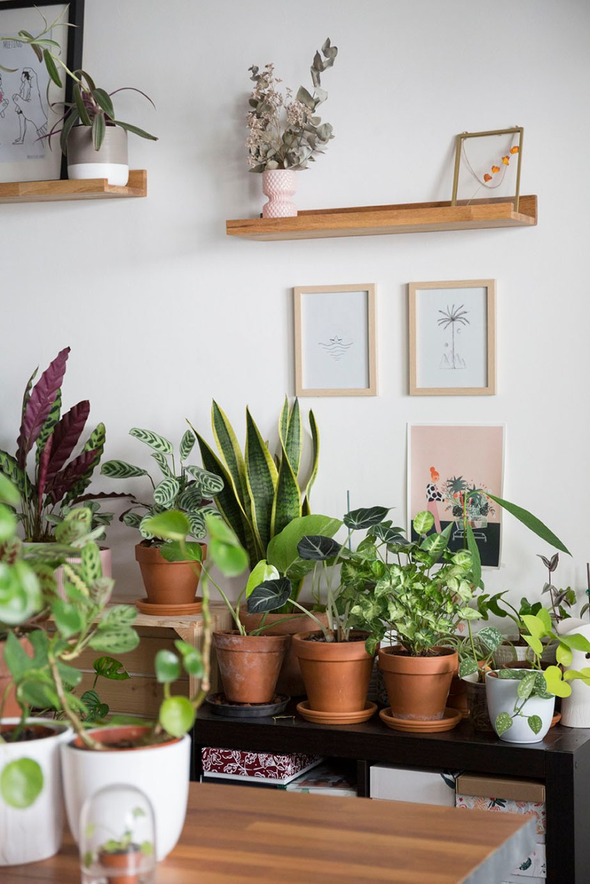 chaleur astuce plante