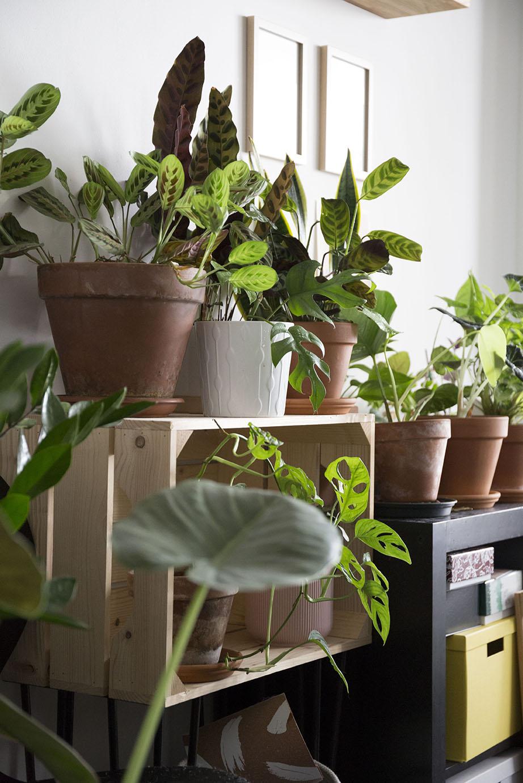 chaleur plantes astuce