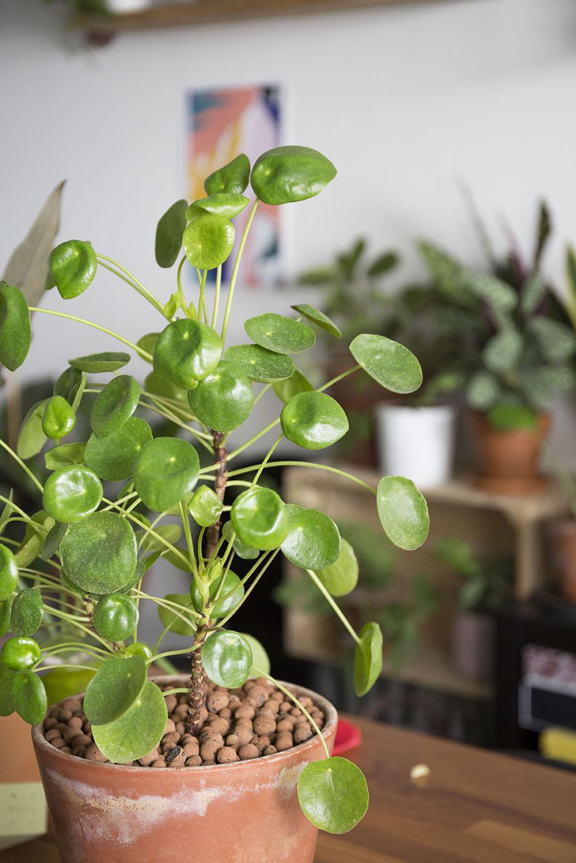 plante chaleur astuce