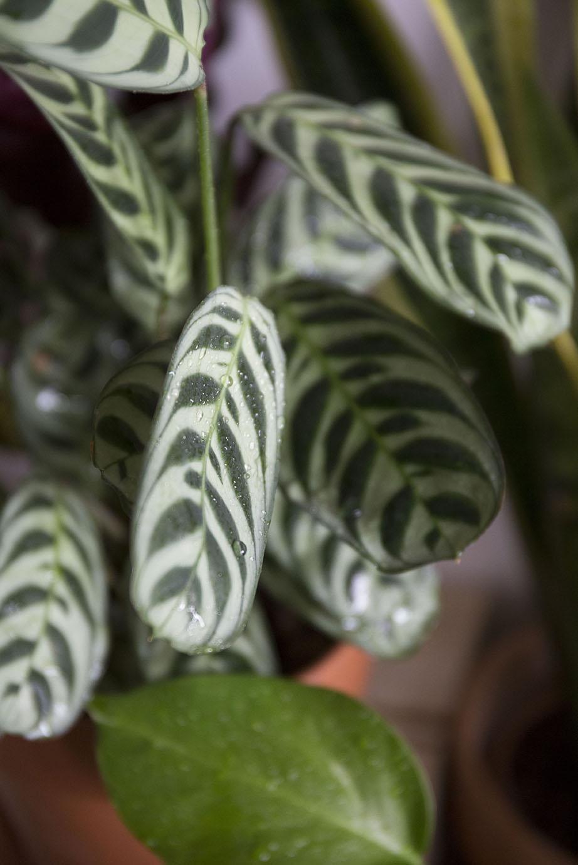 plantes chaleur astuce