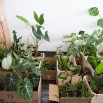 plantes interieur demenagement