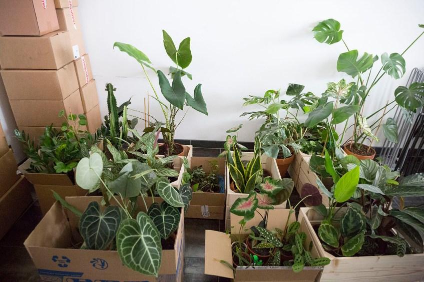 plantes interieur demenagement