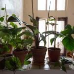 30m2 plantes