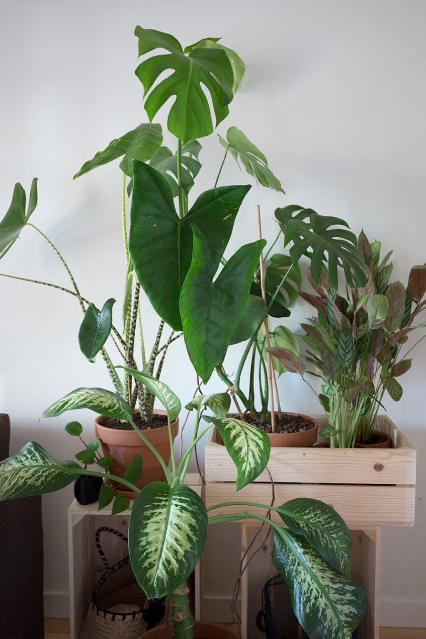 espace petit plantes 30m2