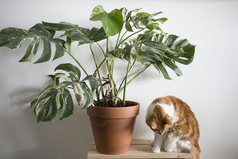 plantes rare boutique en ligne