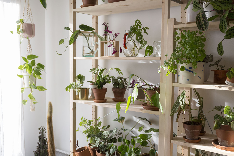 mettre-en-valeur plante decoration