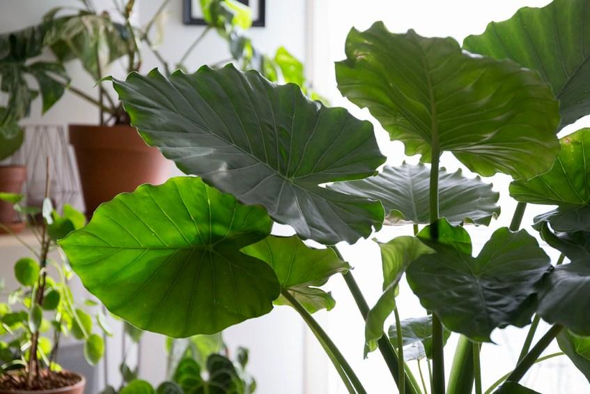 comment choisir sa plante