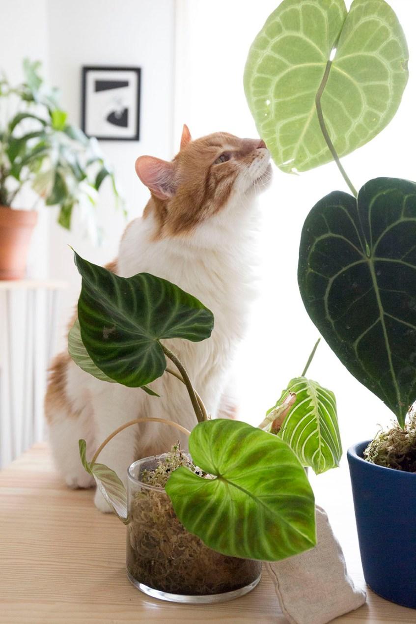 boutures plantes rares