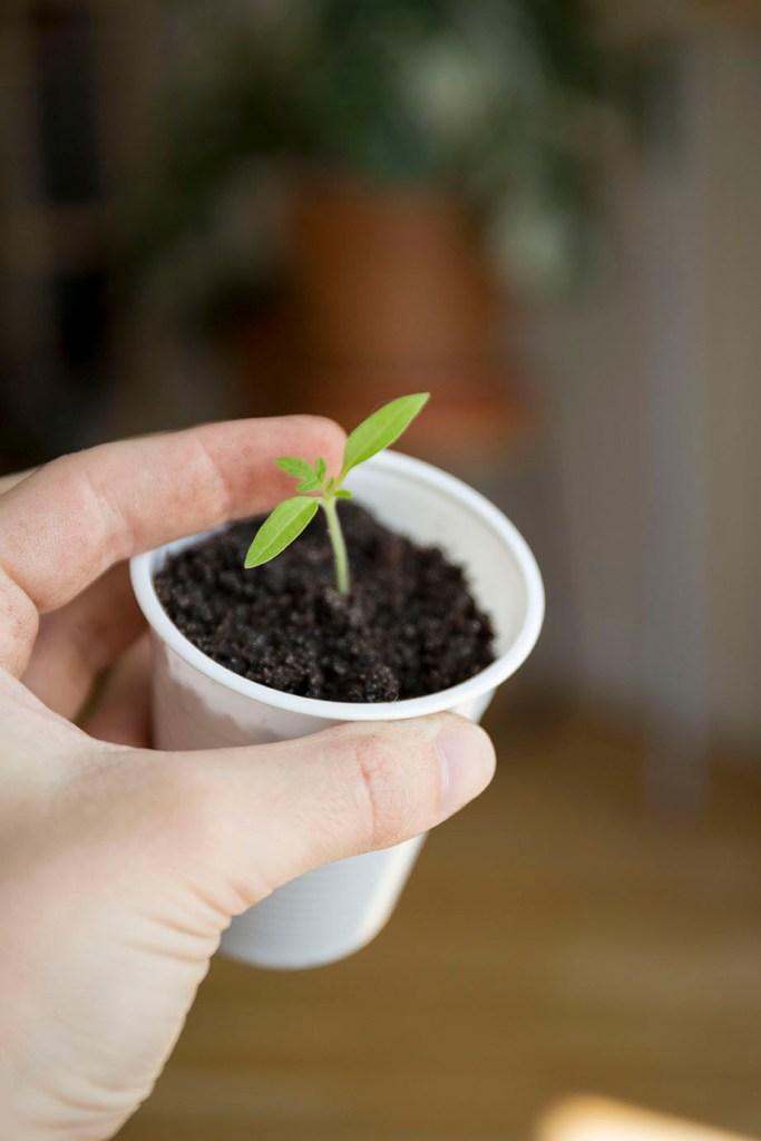 repiquage potager urbain semis