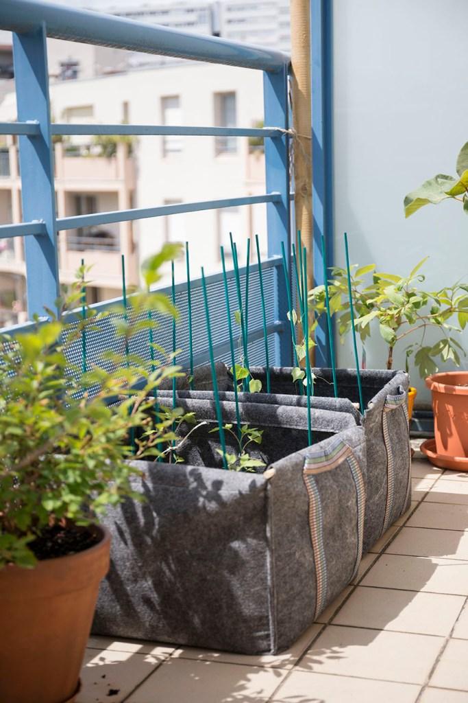 planter pleine terre