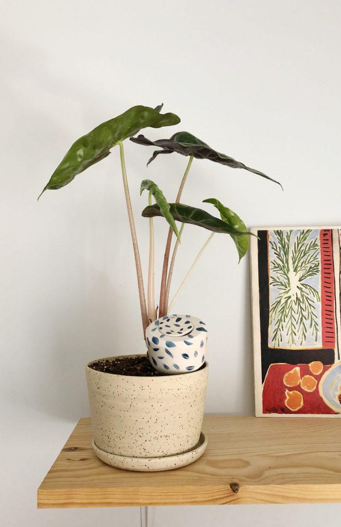 ceramistes creations plante