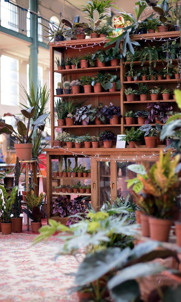 boutique brume plante