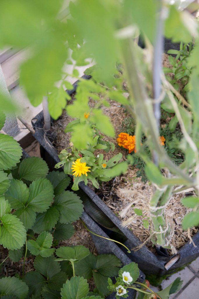 plante potager service
