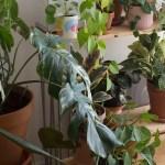 soin plante automne