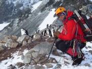 Mountaineering Penguins
