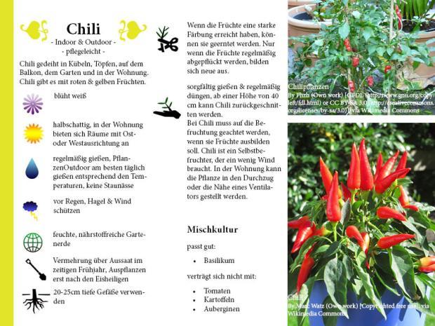 Pflanzenporträt Chili