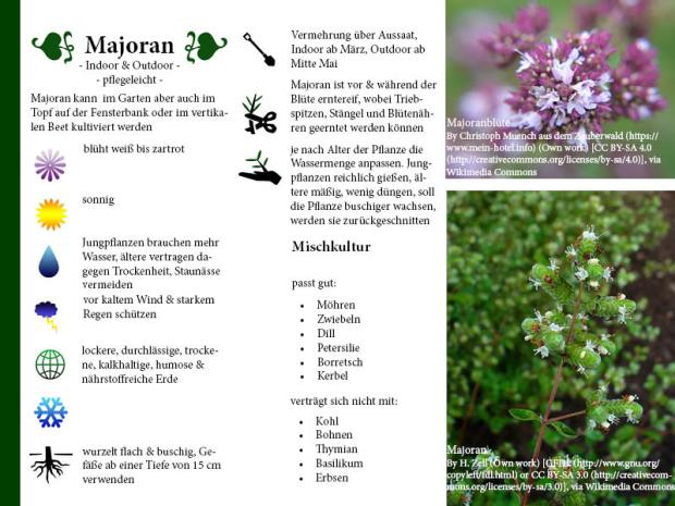 Pflanzenporträt Majoran