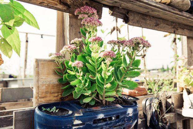 kreative Recyling-Idee für vertikales gärtnern