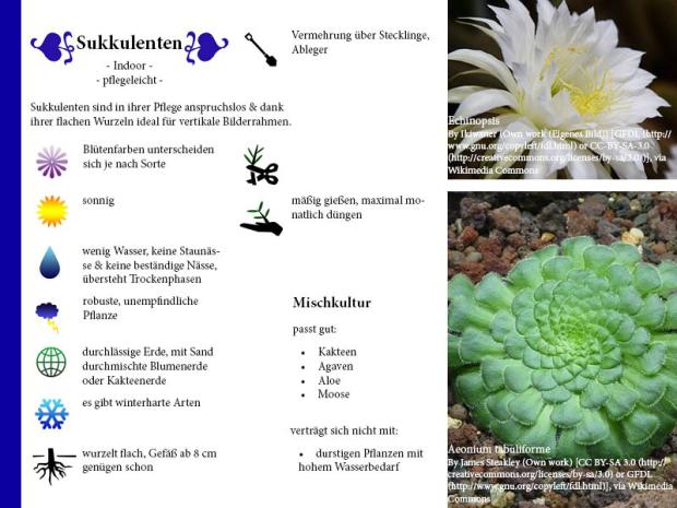 Pflanzenporträt Sukkulente