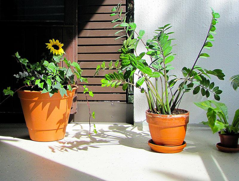 Grün für die Wohnung