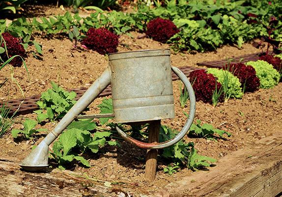 Gießkanne, Garten & Salat. Foto: Pixabay