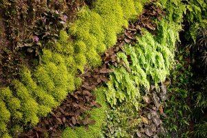 Detail des vertikalen Gartens von Patrick Blanc im Dussmann-Haus Berlin, Ansicht eines Pflanzenbandes mit nach ästhetischen Gesichtspunkten angeordneten Grün- und Blühpflanzen verschiedener Farben und Strukturen