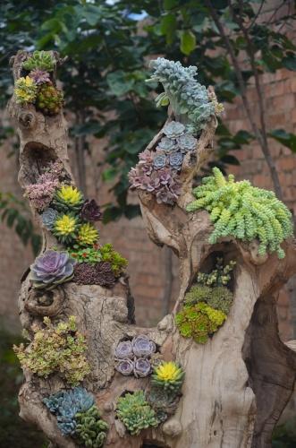 Sukkulente Gartenpflanzen wurzeln beinah überall, sogar auf Holz. Foto: Pixabay
