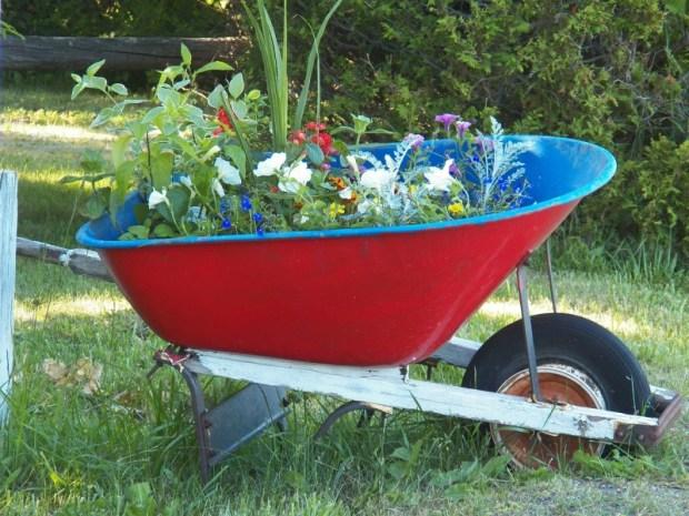 Schubkarre mit sommerlichen Gartenpflanzen. Foto: Pixabay.