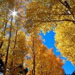 Autumn in St Albans