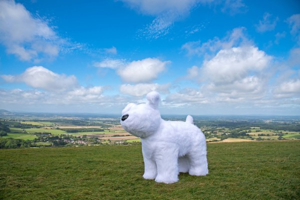 Snowdog Roodle at Devils Dyke