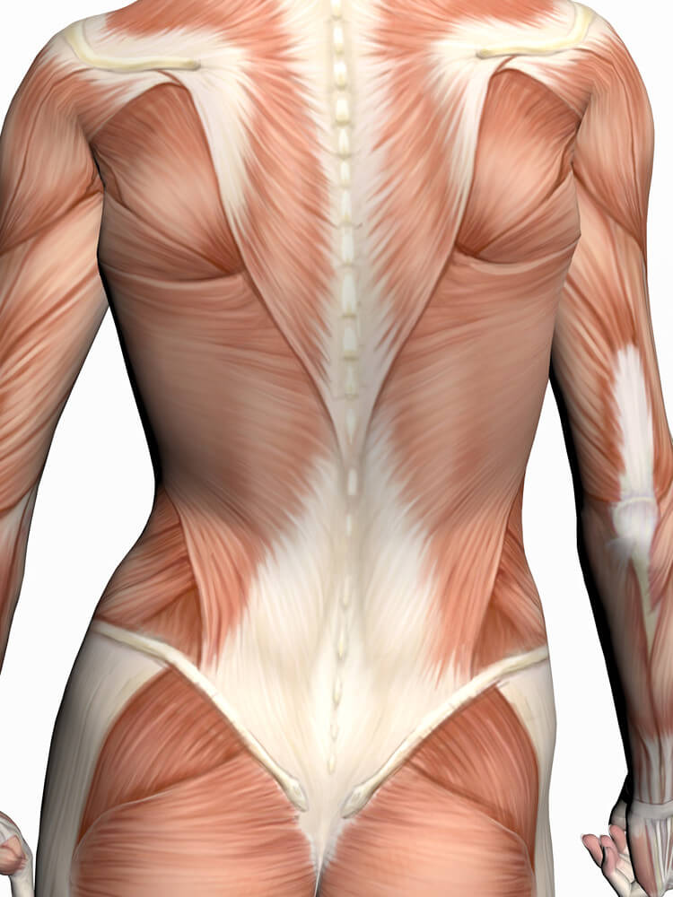 FASCIA AND MYOFASCIAL STRETCHING | Verve Magazine