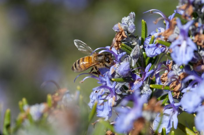 How to build a bee friendly garden | Verve Magazine