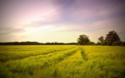Los acondicionadores de suelos y la agricultura ecológica