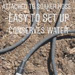 The Right Way to Water Your Garden