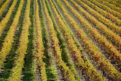 sparkling_vineyards