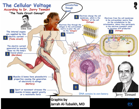 Screen Shot 2020 07 10 at 1.27.31 PM Voltage Healing: 4 Amazing Presentations Vesica Institute for Holistic Studies