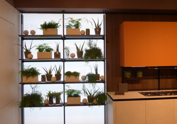kitchen window with shelves to display plants