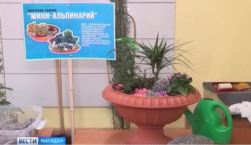 abilimpiks Главная