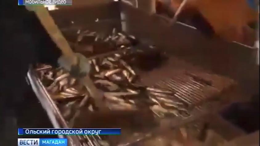 seldevye-reki Главная