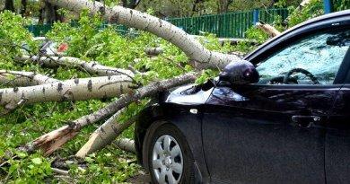 дерево на автомобиле