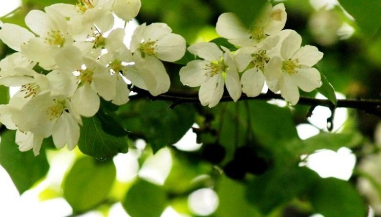 погода_весна