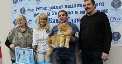 кот рекордсмен Кекс