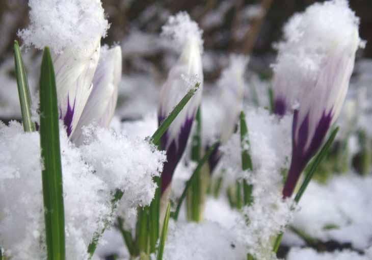 Узбекистан вновь накроют дожди со снегом