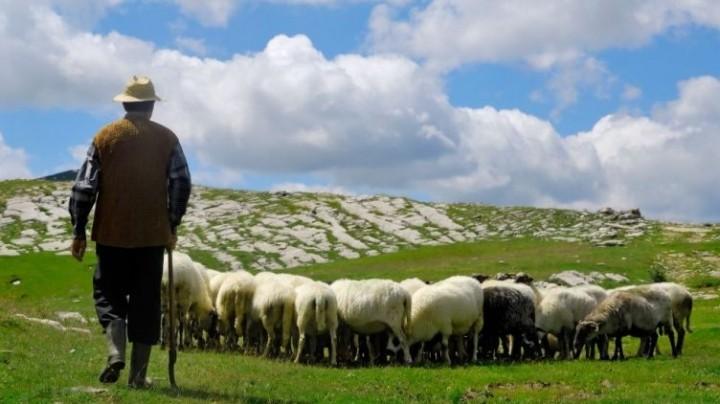 Под Джизаком опрокинулся грузовик с овцами